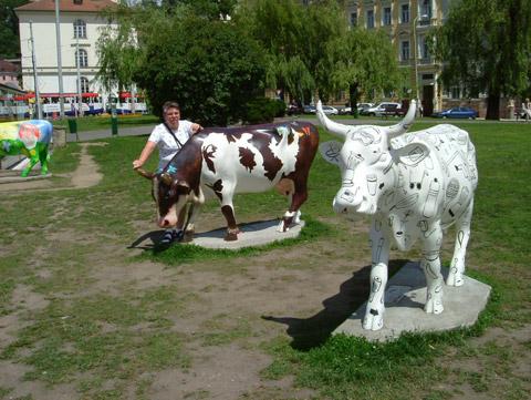 cow13.jpg